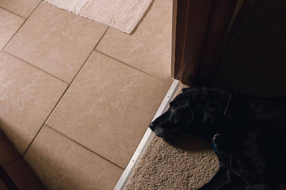 black laborador sleeping at door