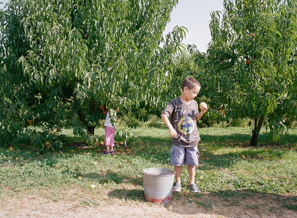 family picking fresh peaches