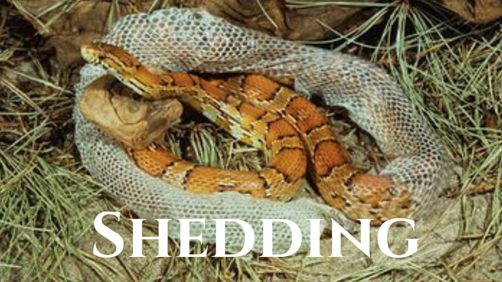 shedding.png