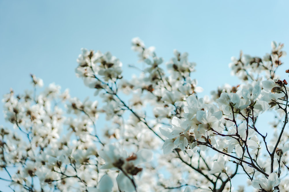 Happy Spring Equinox & Super Full Moon In Libra!