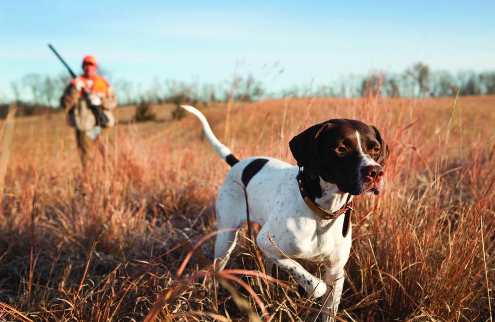 Hunting - RC.jpg