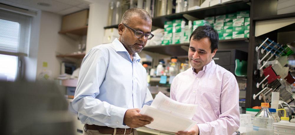 Kartik Chandran, Ph.D., and Rohit Jangra, Ph.D.