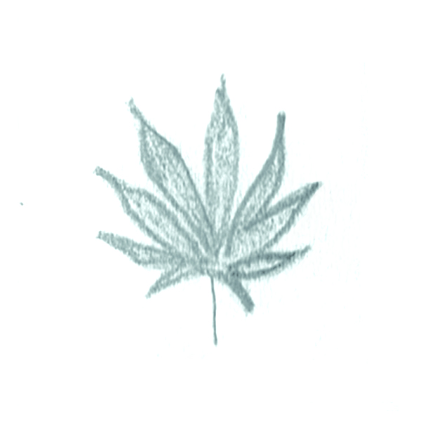 sativa3-iconRoughs.jpg