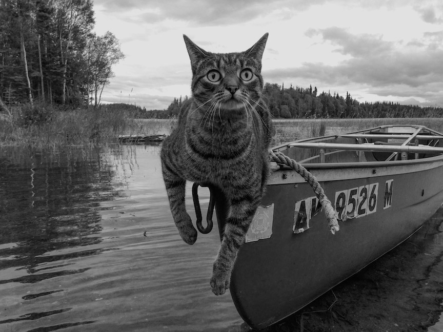 canoe WITH CAT