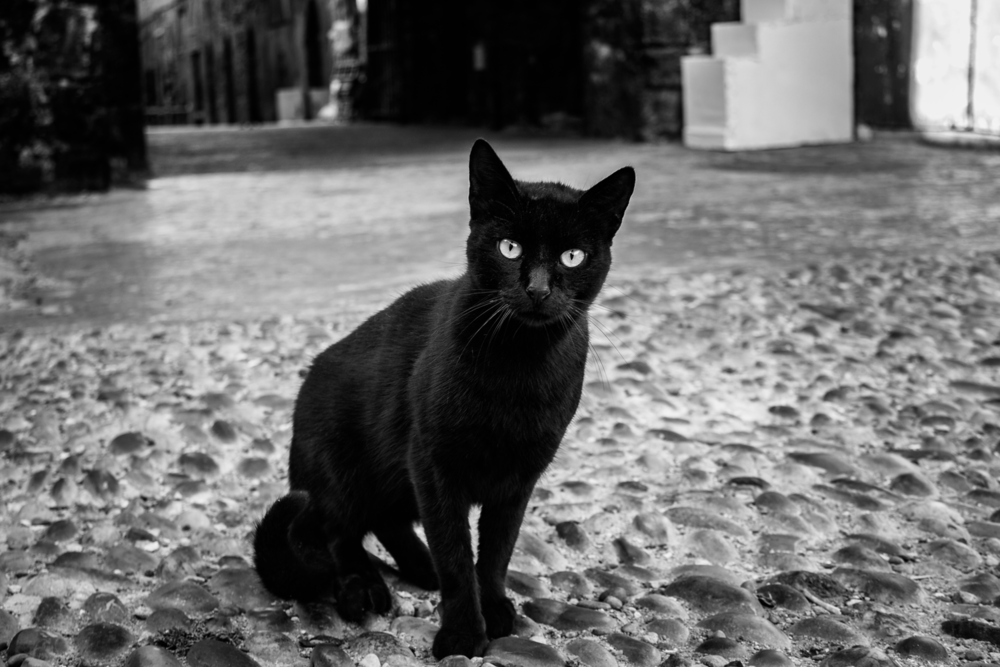 street WITH CAT