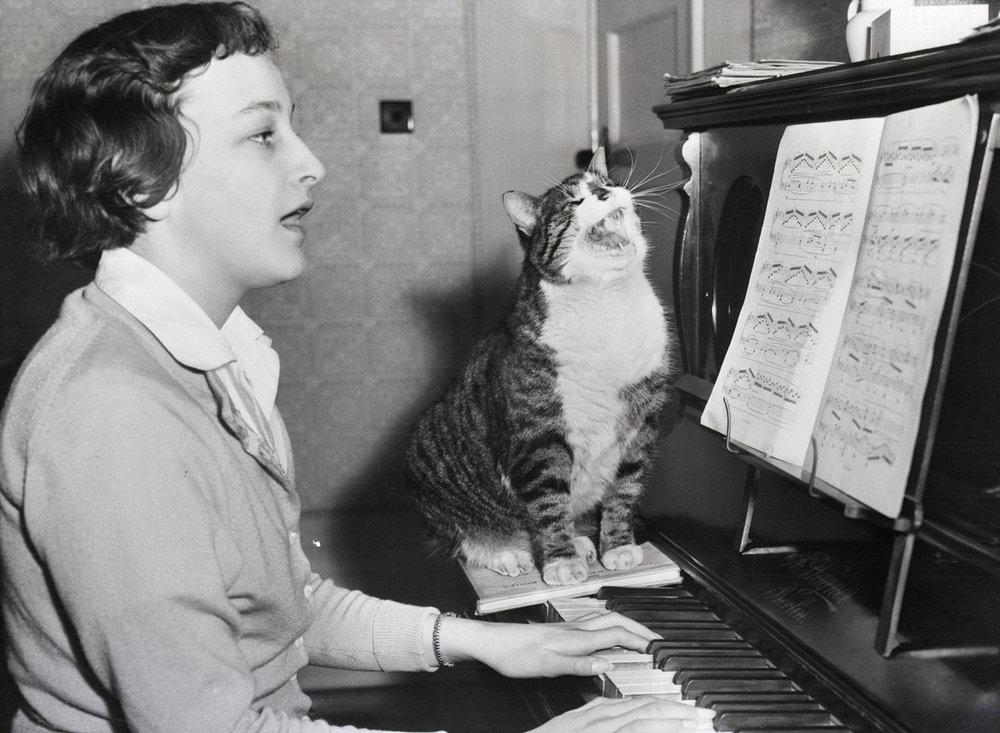 singing with cat