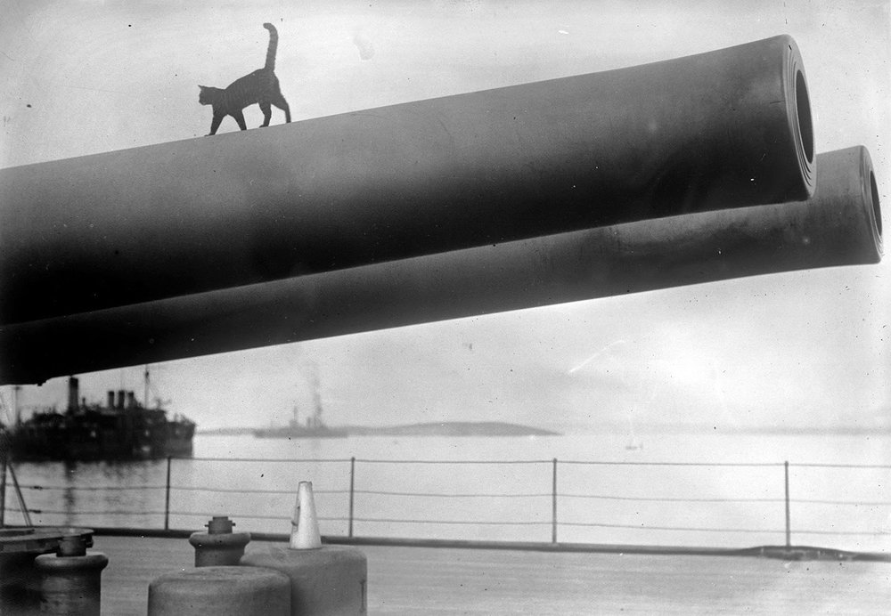 w_17_cat_on_ship.jpg