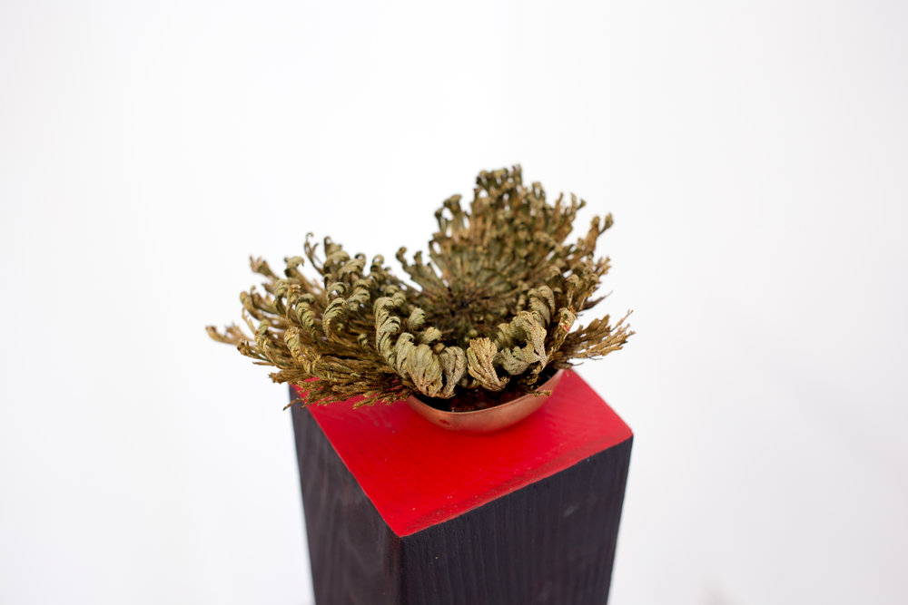 Lisa Kirk,  Resurrection Plant , 2016. Detail view. Efrain Lopez Gallery.