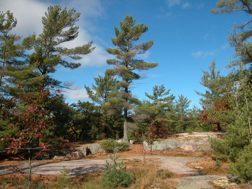 Rock Barrens
