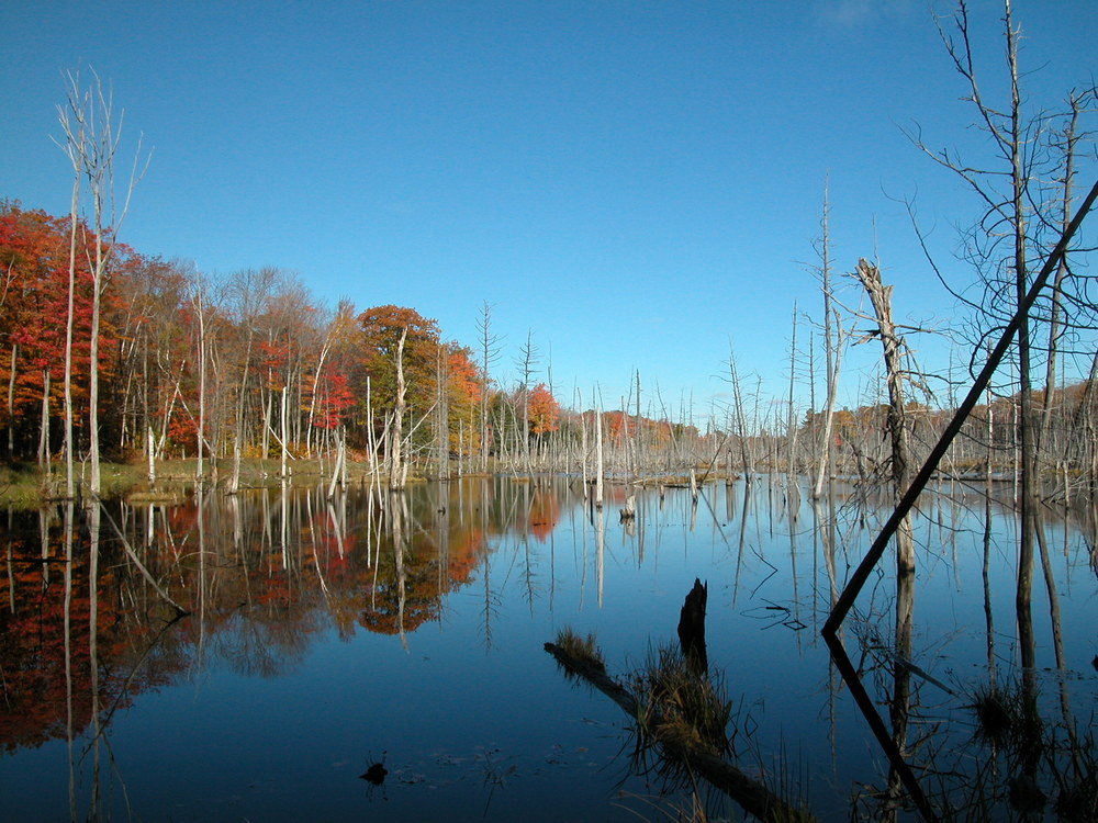 Killbear wetland