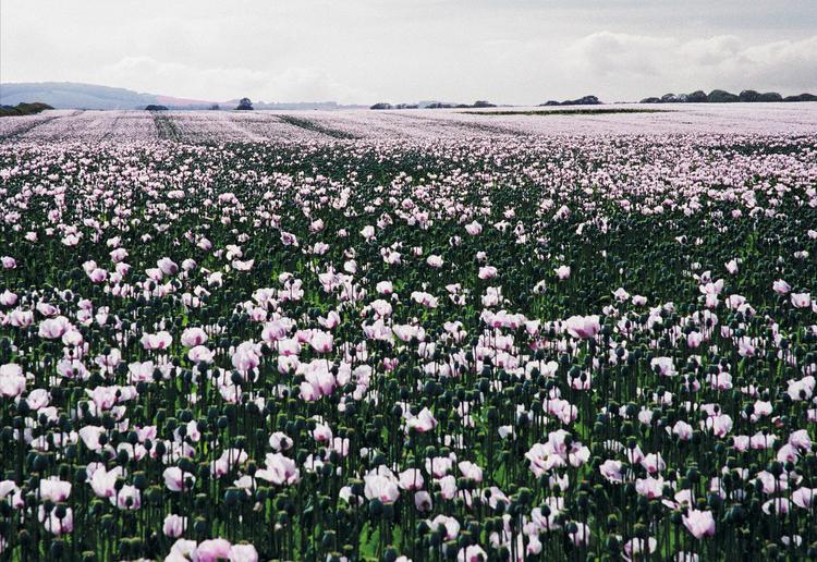 Flanders Field
