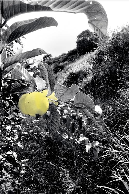 Maui Fruit