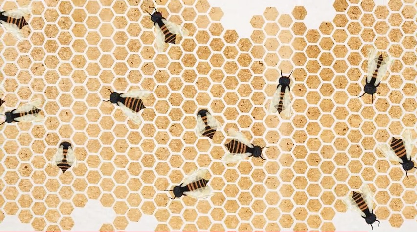 "Image from Zack Patterson and Andy Peterson's Ted-Ed original ""Why Do Honeybees Love Hexagons?"""