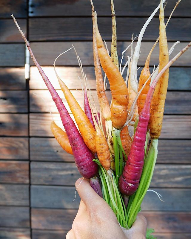 I really do carrot all. Do U? . . . . . #weshouldallcare #familiesbelongtogether #novemberiscoming #stayrooted