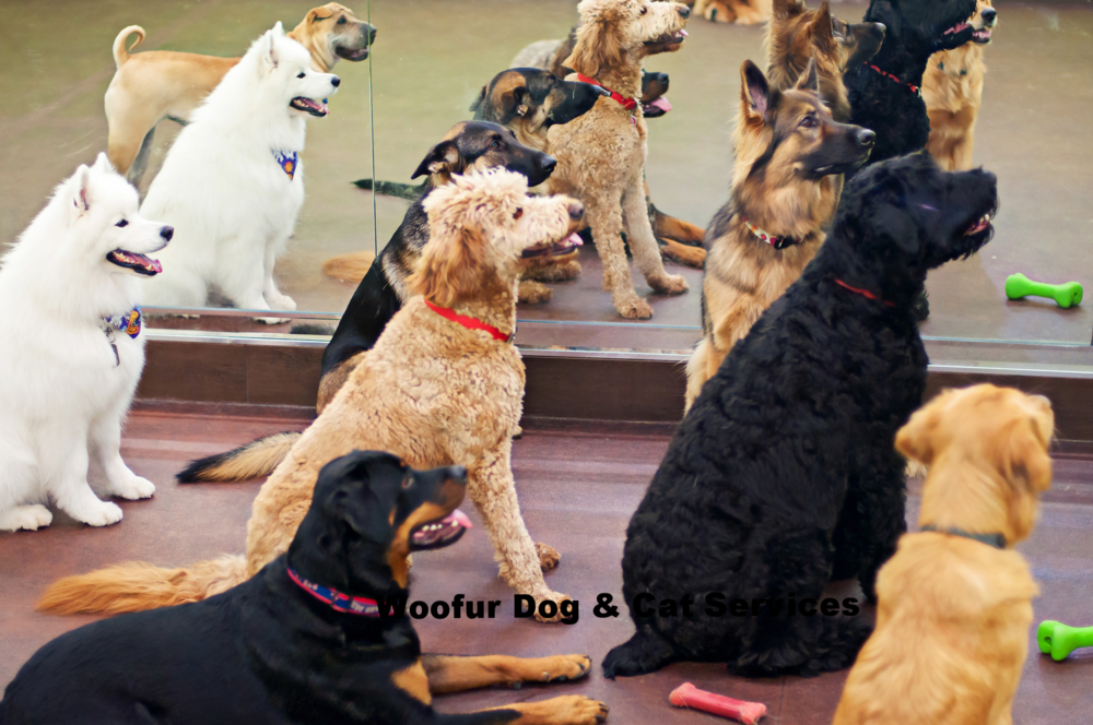Practicing Sit and Stay with our Daycare Pack