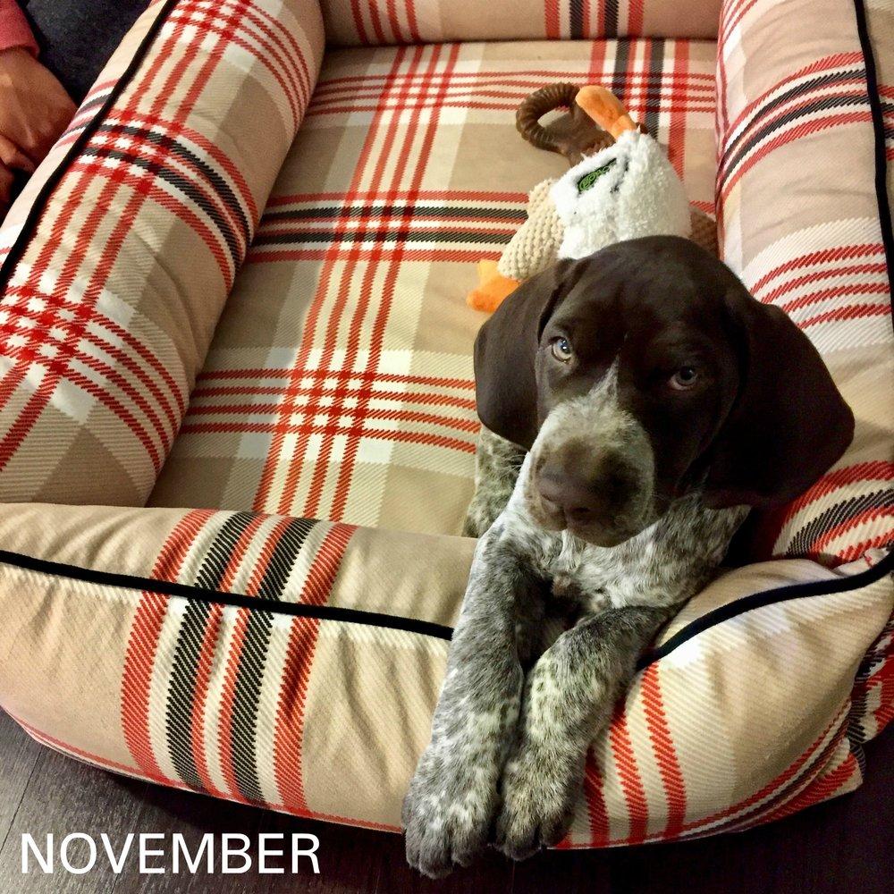 November_Konidis_Brenner.JPG