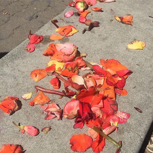 Begonia trash 🔸🔶🔸