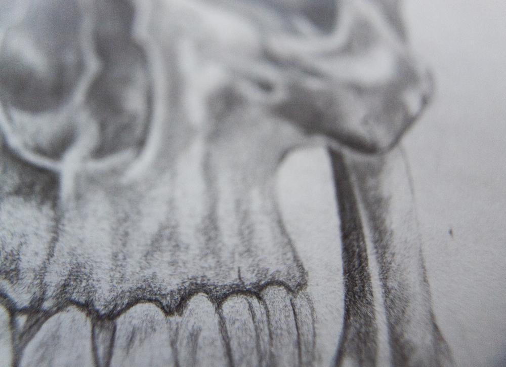 Skull Detail I