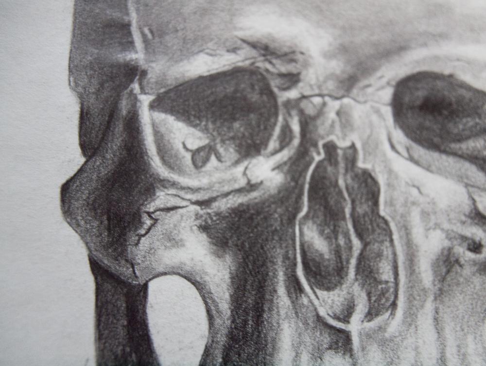 Skull Detail II