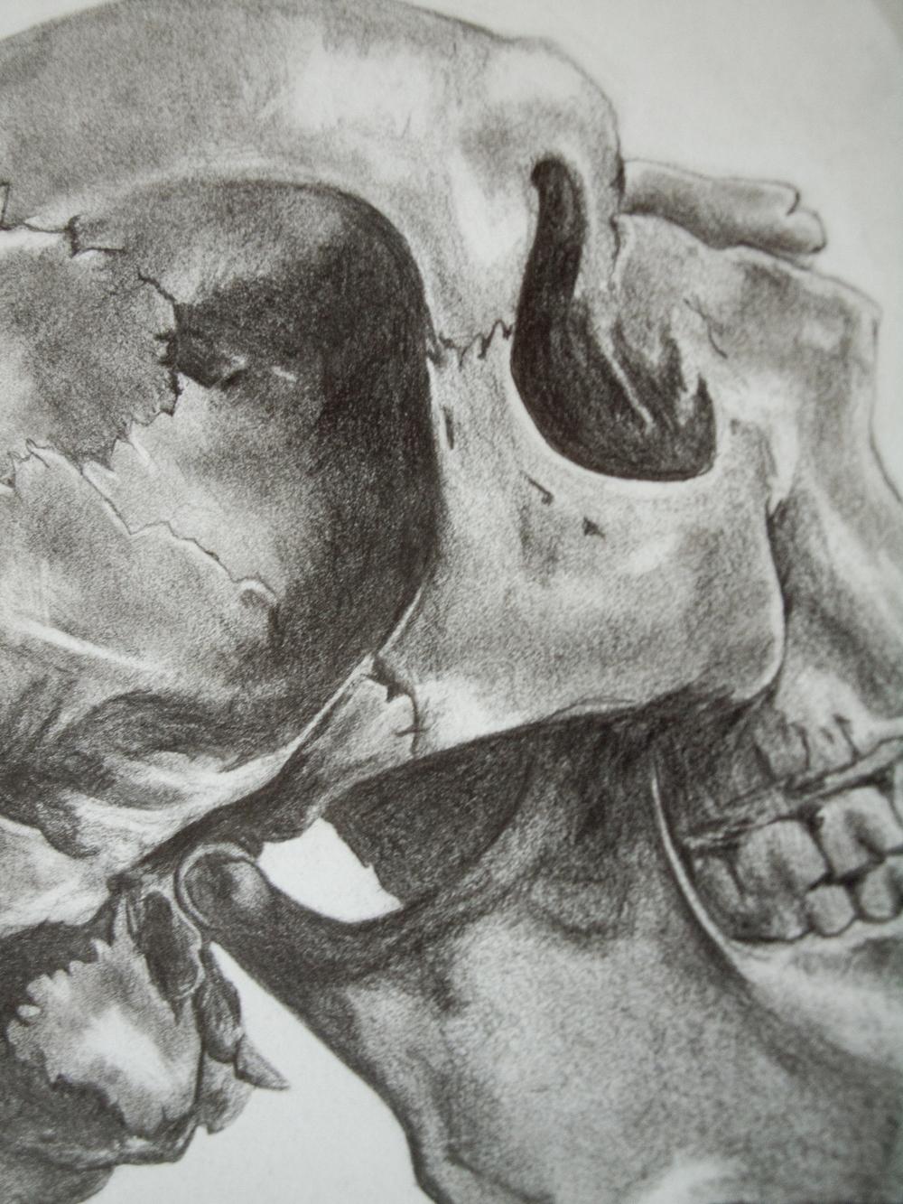 Skull II Detail I