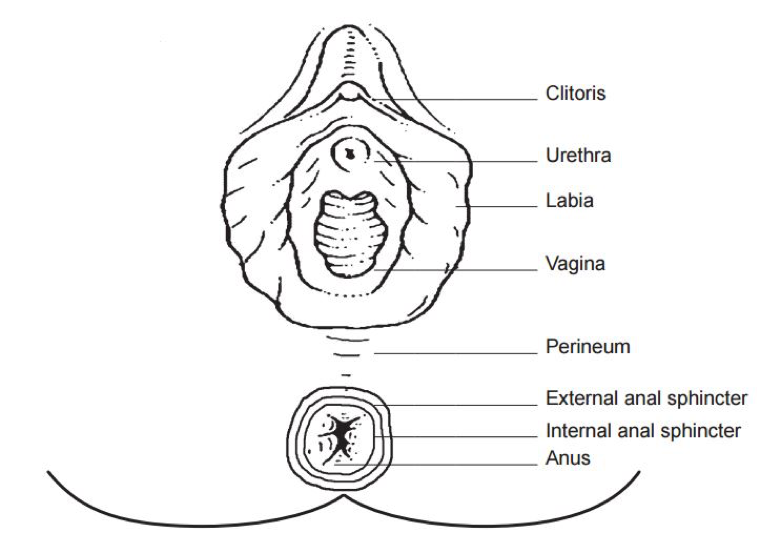 Perineal care.png