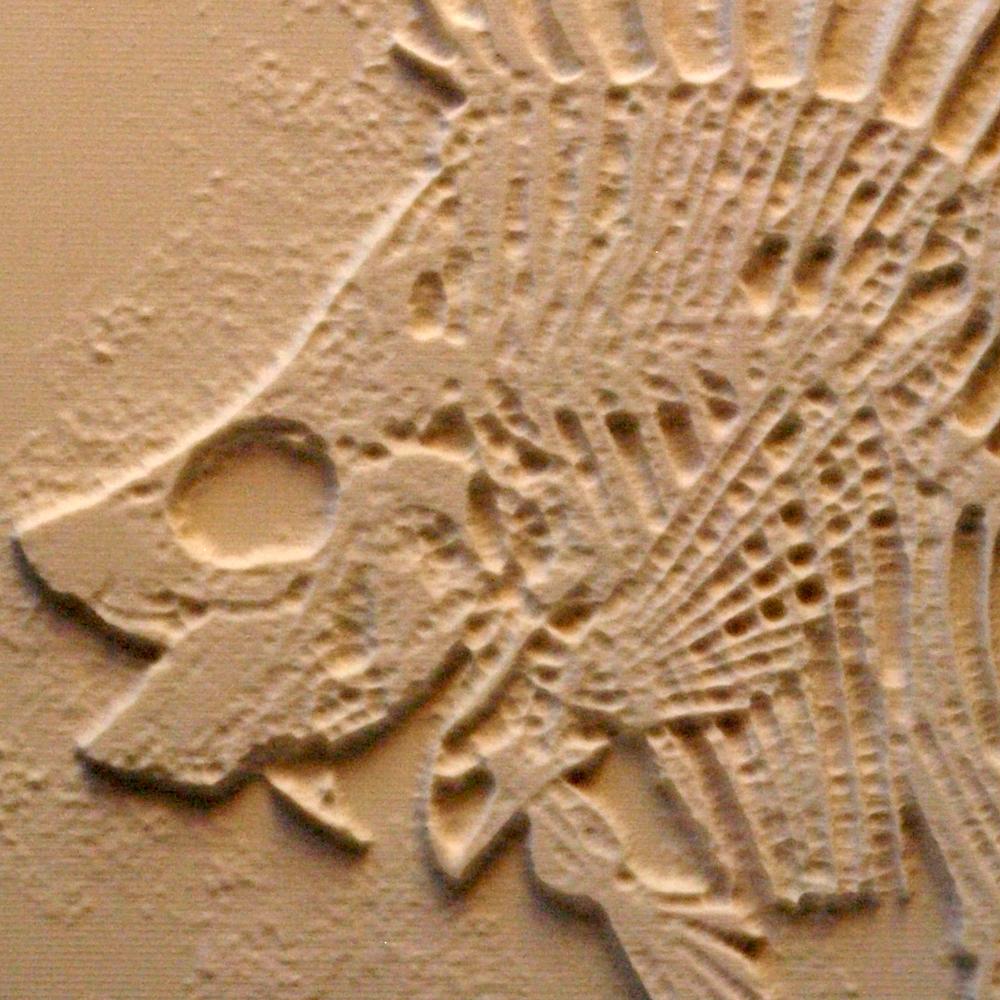 fish skeleton.png