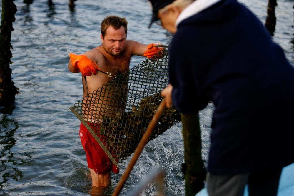 OYTERS FARMING IN ARCACHON, Story for The New York Times