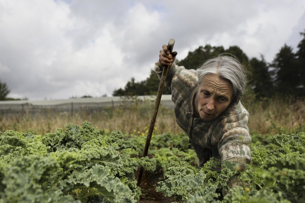 THE KALE CRUSADER, Story For  The New York Times    . Hermione Boehrer, Kale grower in Coulommiers, France