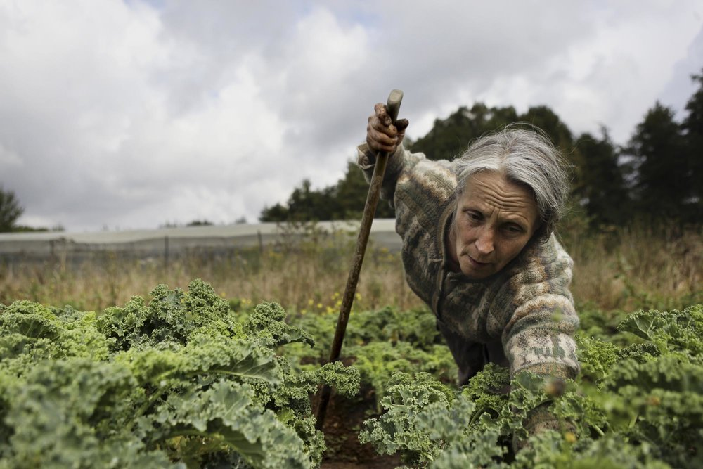 Hermione Boehrer harvesting kale crops in her farm in Coulommiers.