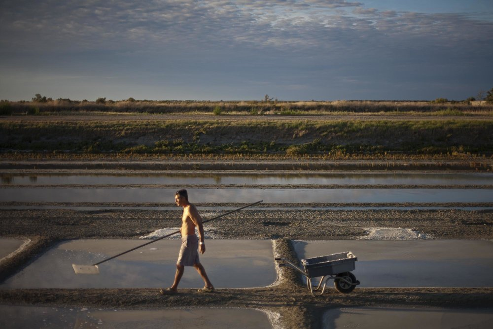 16/8/12 Loix: Emmanuel Mercier working on his salt fields outside the village of Loix, Ile de Re.