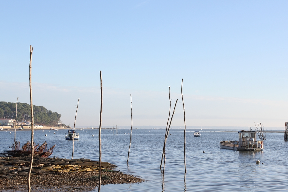 paysage bassin (46).JPG