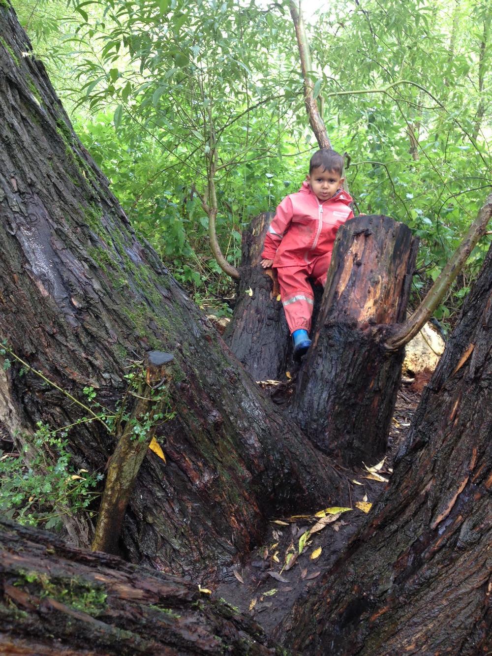 lff-autumn-week1-tree.jpg