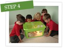 baby-chicks-step-4.jpg