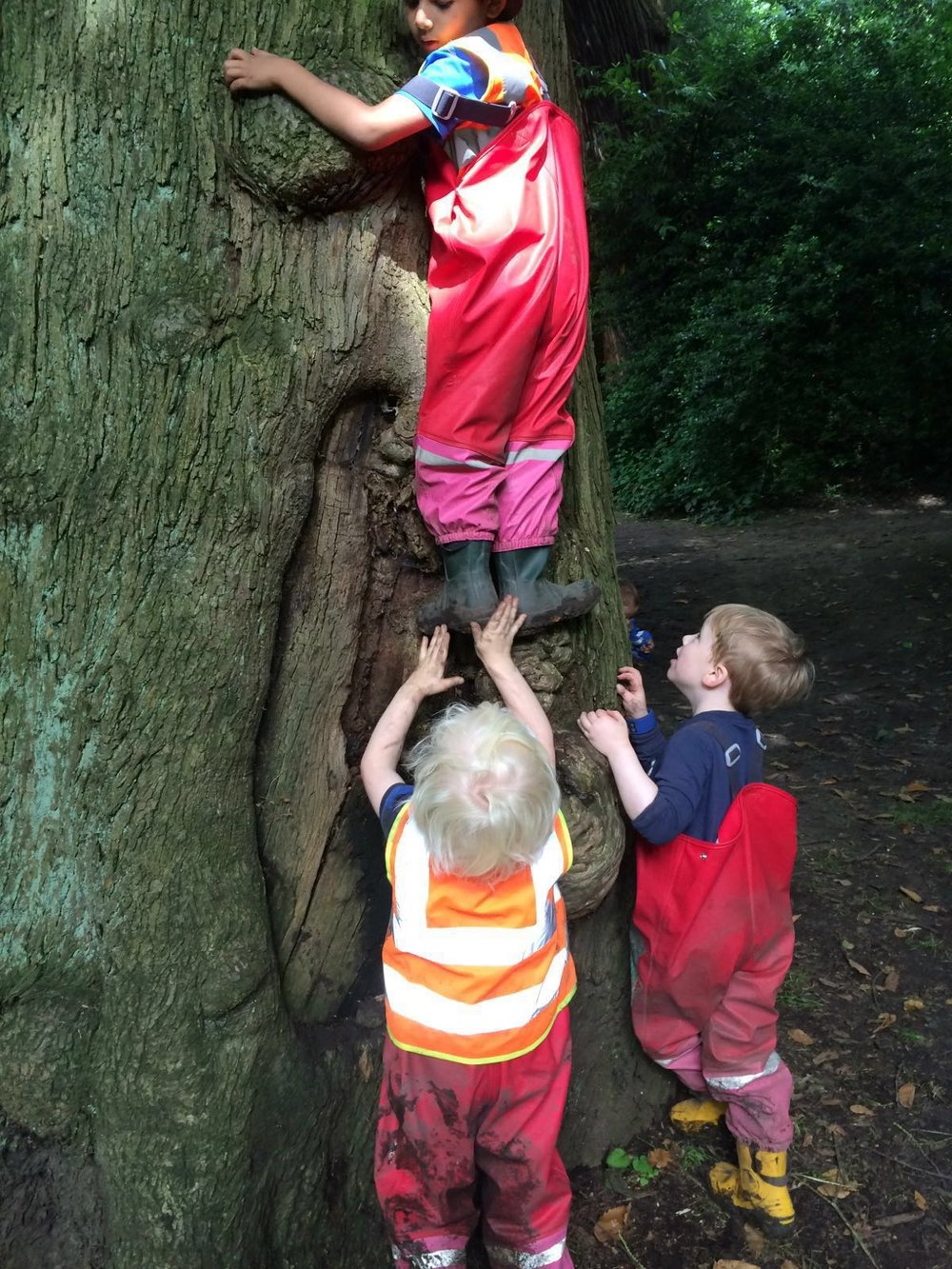 A group of 2-3 year olds motivate each other to climb to the top of a tree