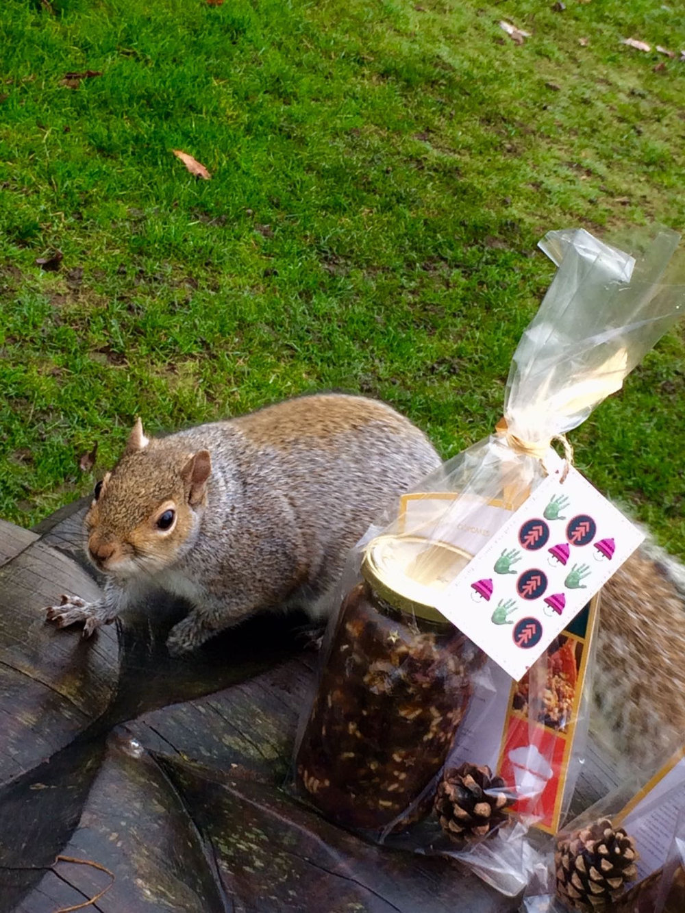 Cheeky squirrel admiring out stir up jars :-)