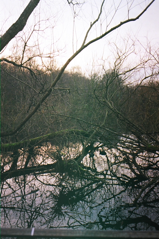 Hampstead Heath, 2015