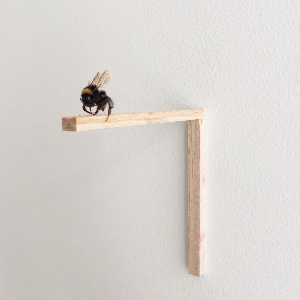Granted, 2016, Dead bumblebee found on the day of the Brexit results, Balsa wood.