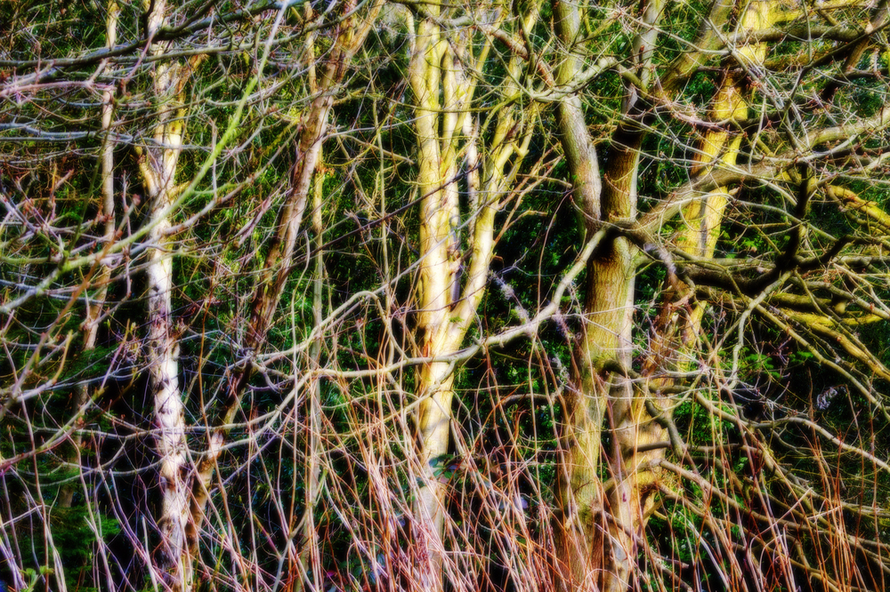 Allestree Park, Derbyshire #1