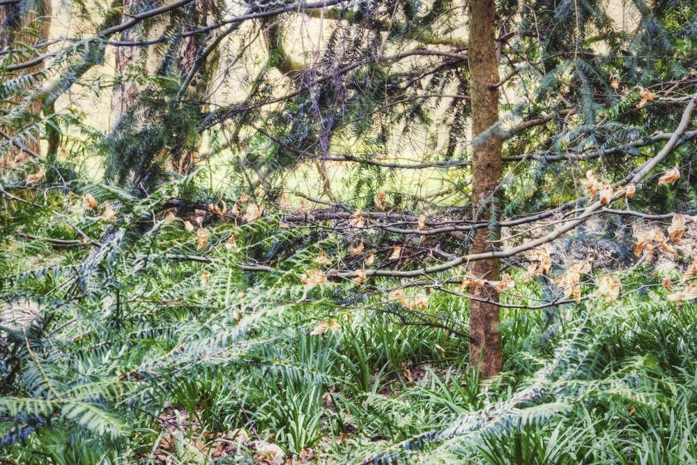 Allestree Park, Derbyshire #2