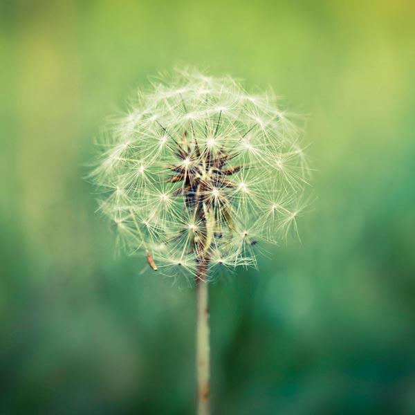 FLOWER_17.jpg