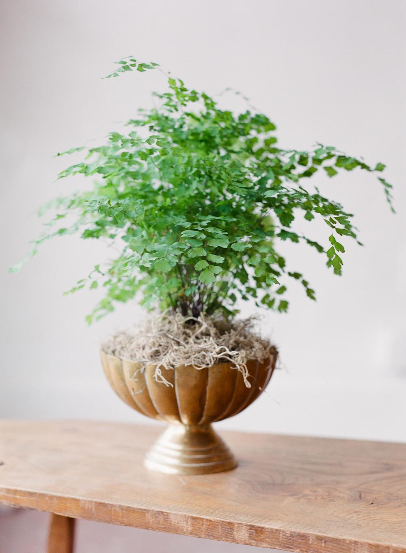 Maidenhair fern - Maidenhair floral