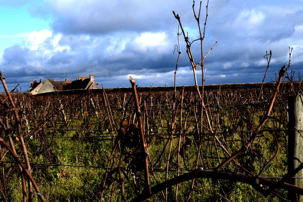 vigna-invernale-borgogna