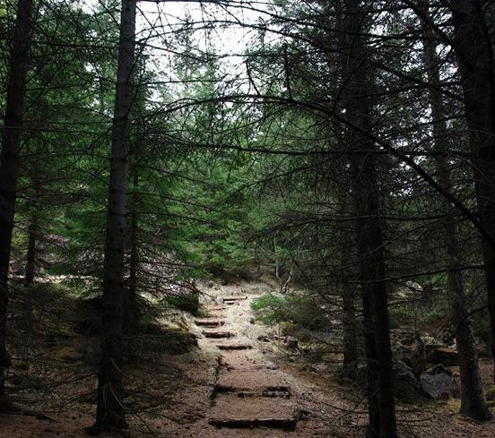 skogur.jpg