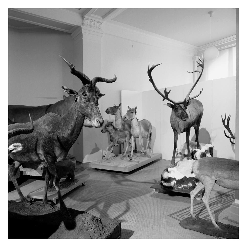 naturkunde_museum_berlin_004.jpg