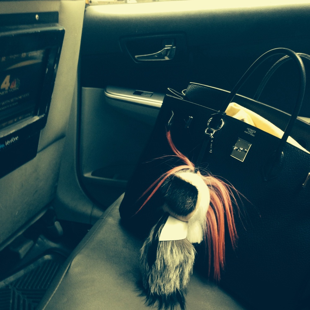 My Karlito riding shotgun