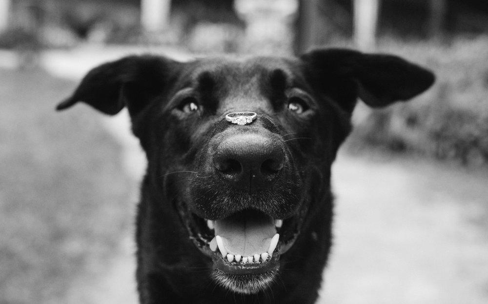 DewolfeSweetmanEngagement-72.jpg