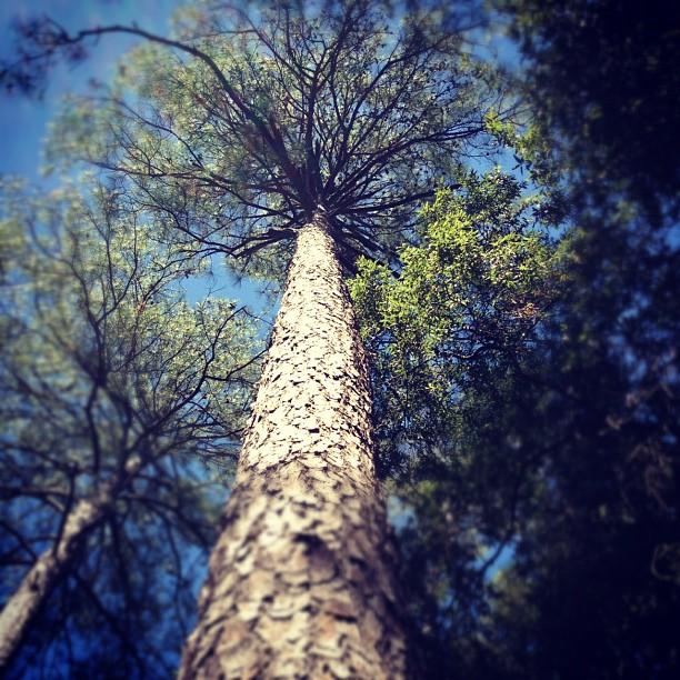 01 Trees 1