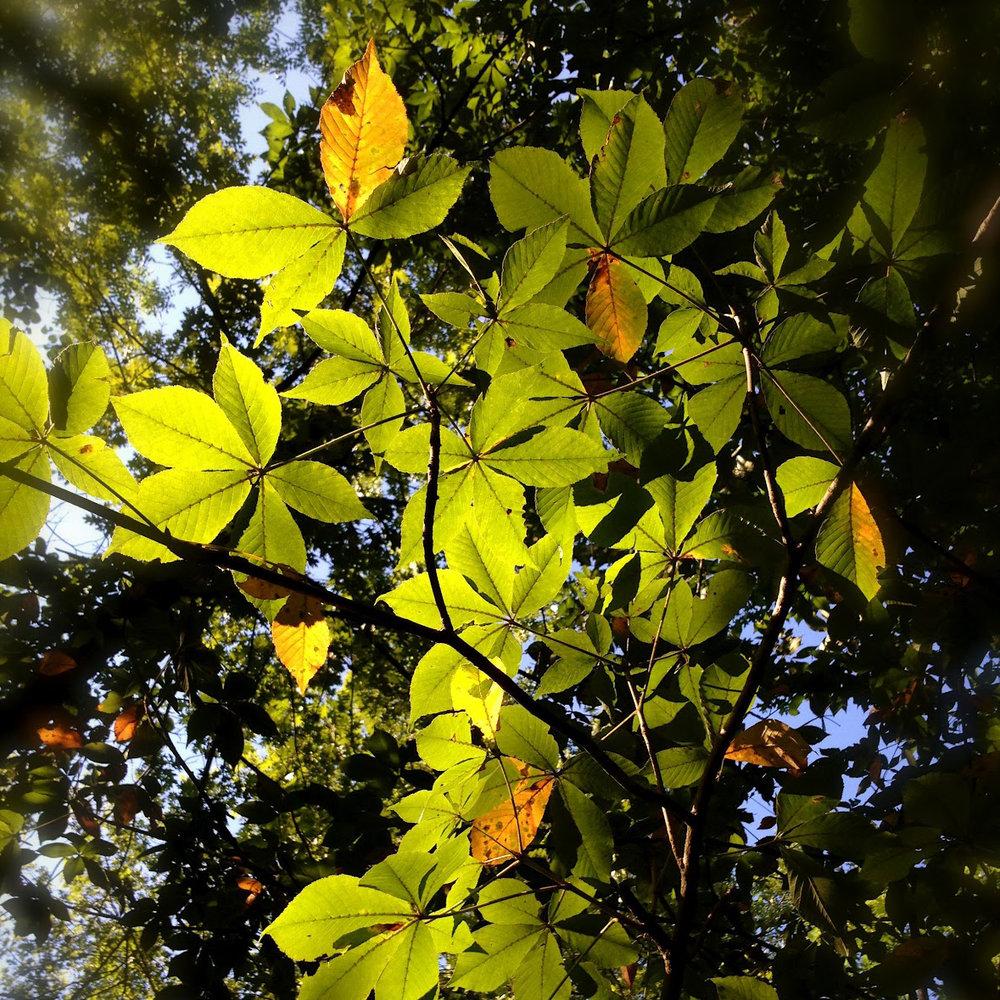 04 Trees 1