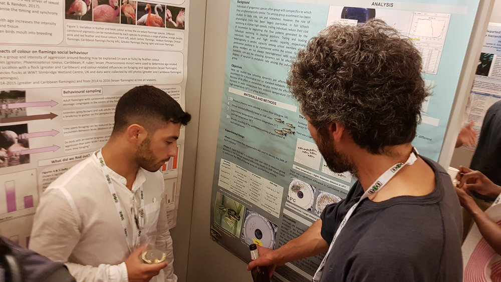 Luca Pettinau presenting his poster on how metabolic rates affects assortment within fish schools.