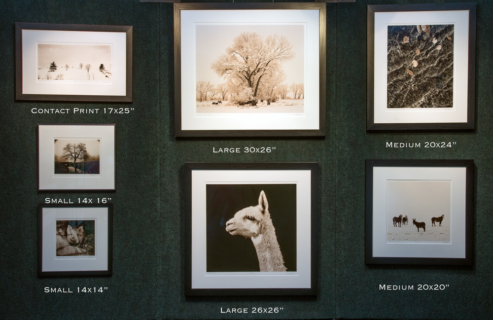 From the left: on top is Running Horses framed in antique black; directly below is an image not currently available; below that is Ogar framed in black wood.  In the middle on top is Winter Bishop framed in black wood.  Below is Marcie #1 framed in black wood.  On the right is Zion Leaves framed in black wood. Below that is Pedro and Friends framed in black wood.